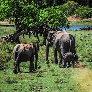 The 3 Safaris you must experience